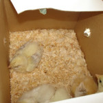 The latest additions to Apple Tree Farm…