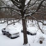 A snowy Sunday
