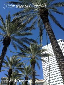 palmtreesoncanal