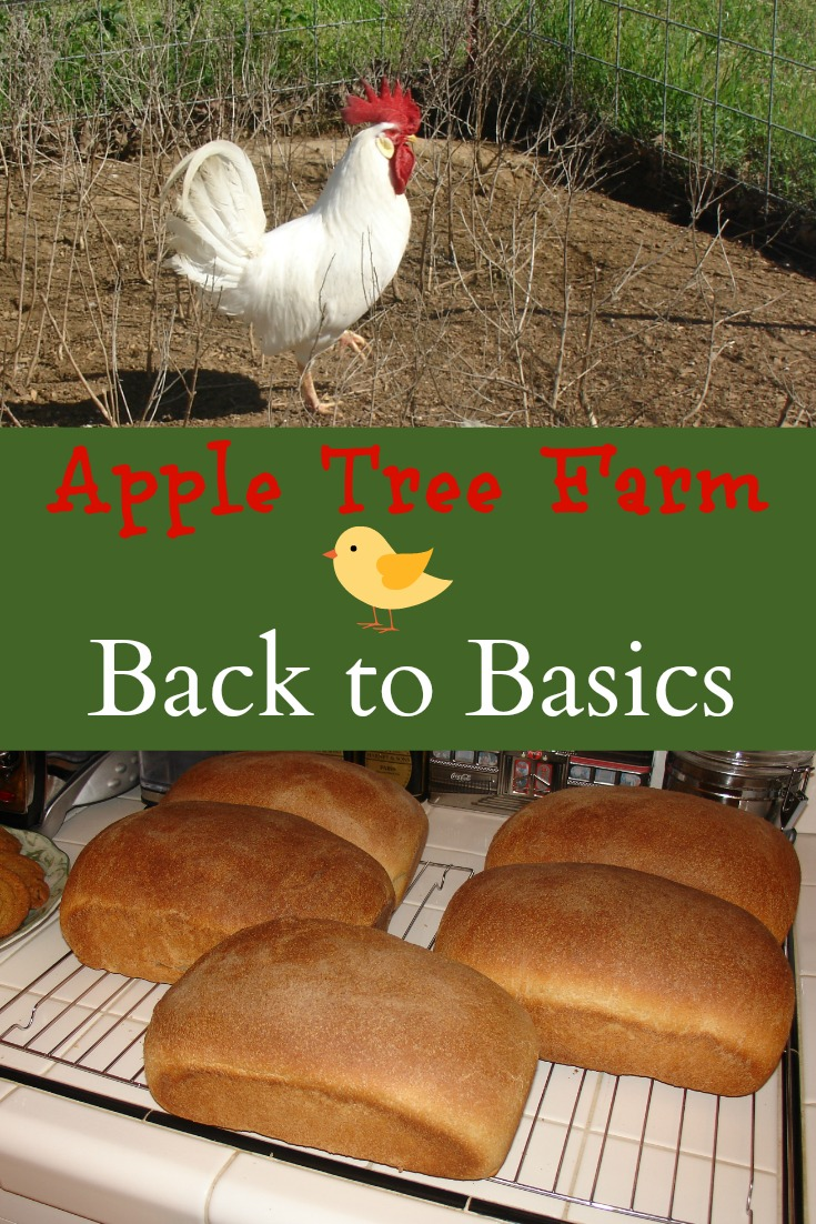 Back to Basics - Apple Tree Farm