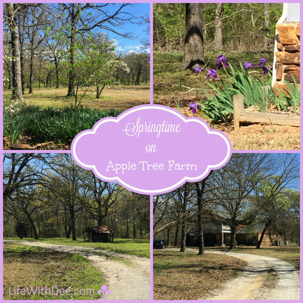 Springtime on Apple Tree Farm