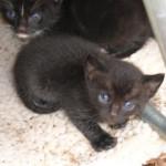 Earth Day Kitties…