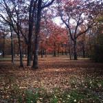 Autumn on Apple Tree Farm