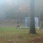 Oh, deer…